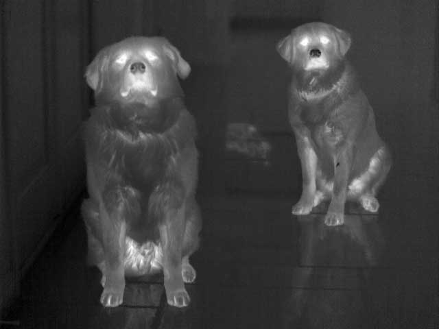 A picture of dogs taken with the PM 640 Infrared Camera