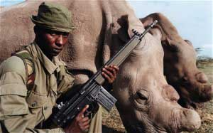 infrared UAV cameras on drones can help stop the extinction of the black rhino.