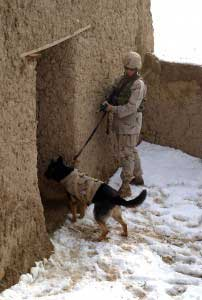 25th ID - canines with infrared cameras & night vision technology to improve battlefield operations